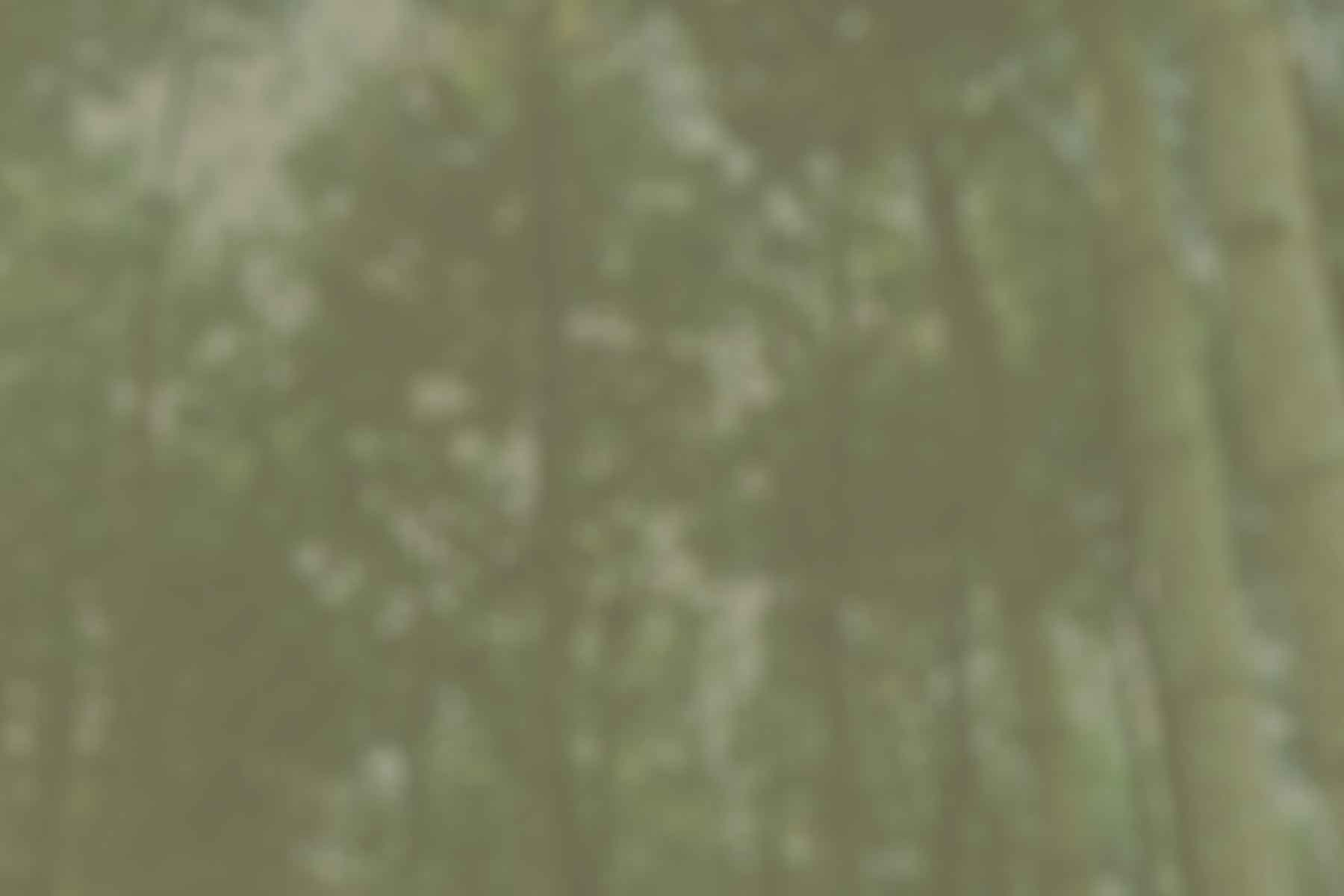 MTYC_treebackground